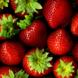 Odla egna jordgubbar